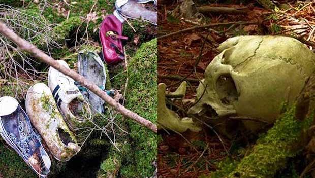 Aokigahara Forest in Japan Holds Horrifying Secret